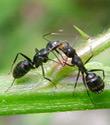 Ragni e formiche puliscono la Grande Mela
