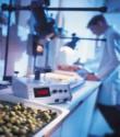 La vita commerciale di un prodotto alimentare: panorama legislativo di riferimento, metodi di determinazione