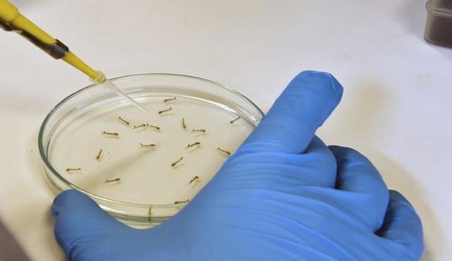 Il batterio legionella verrà individuato in pochi minuti grazie a uno scanner basato sulla luce