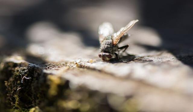 Fastidioso come una mosca, evento di formazione nel verde