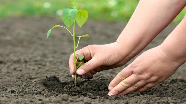 """Afidamp Organizza una giornata all'insegna del """"think green"""""""