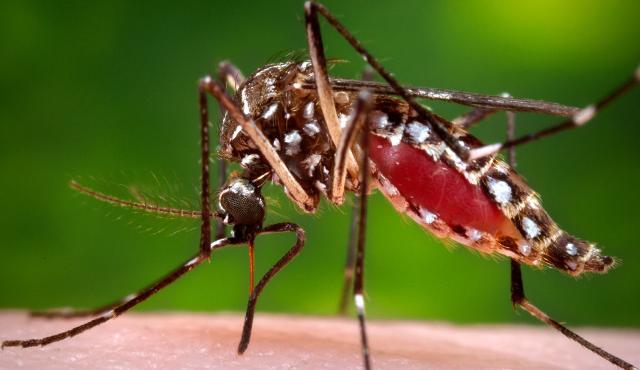"""Seminario su """"Malattie da vettore e Zika virus"""""""