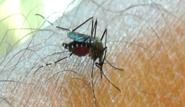 Le zanzare invasive arrivano in italia: problemi e rischi correlati
