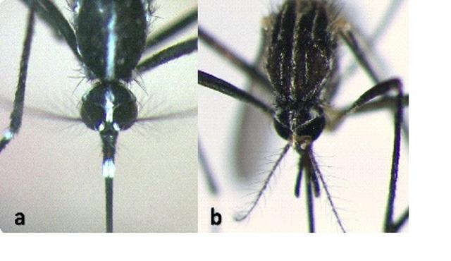 """""""Il porta a porta"""" come metodo di controllo delle zanzare invasive"""