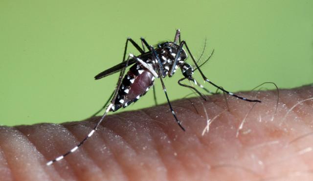 Infezione da virus Zika segnalate in Francia