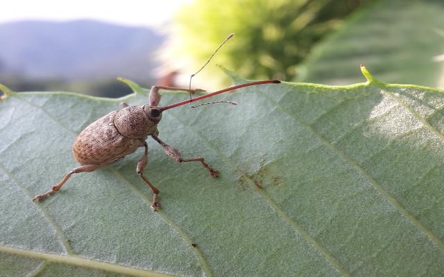 Al via il XXVI Congresso Nazionale Italiano di Entomologia