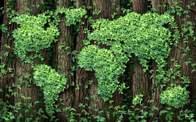 Giornata mondiale della Terra: nasce oggi la Foresta Bayer Italia