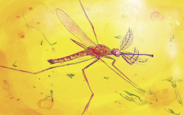 Zanzare, una lunga storia e qualche curiosità…