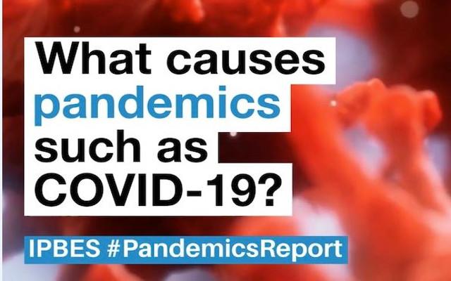 Pandemia e pulizia, abbiamo davvero imparato la lezione?
