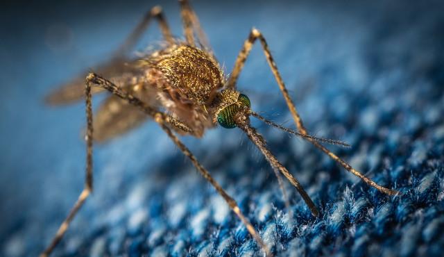 Per un controllo sostenibile delle zanzare: tra prevenzione sanitaria e benessere sociale